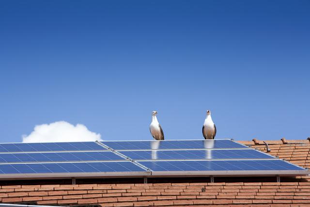 vogelnest, zonnepanelen, veiligheid, brand, gevaar