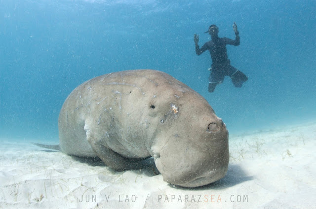 Scuba Diving, Underwater Photography, Jun Lao, Learn Scuba Manila, Dugong Dive