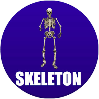 skeleton in spanish