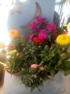 زهرات ربيعيه