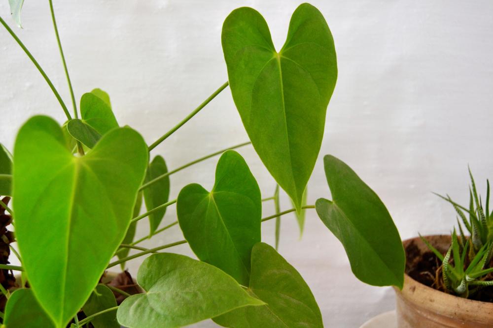 Cómo ayudar a tus plantas con la llegada de la primavera, consejos fáciles para tenerlas bonitas