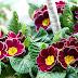 ดอกไม้ประจำวันเกิดแบบเกาหลี (มกราคม-มีนาคม)
