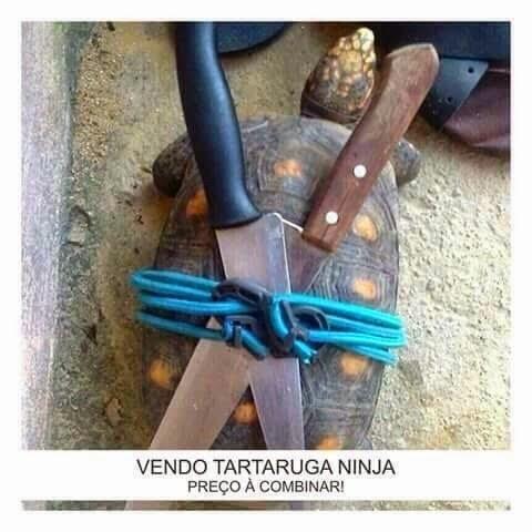 a+ninja.jpg