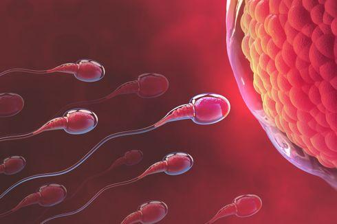 meningkatkan kesuburan suami agar istri cepat hamil setelah kb