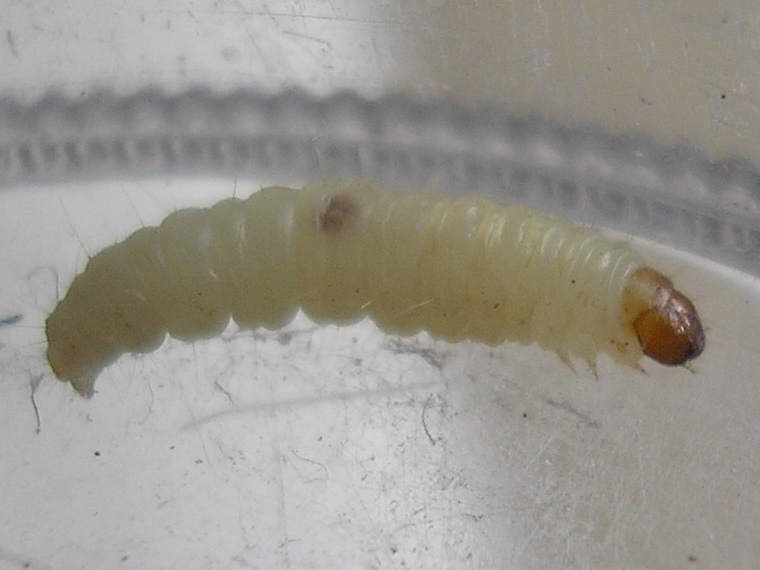 Dead Maggots Under A Cats Tail How To Get Rid
