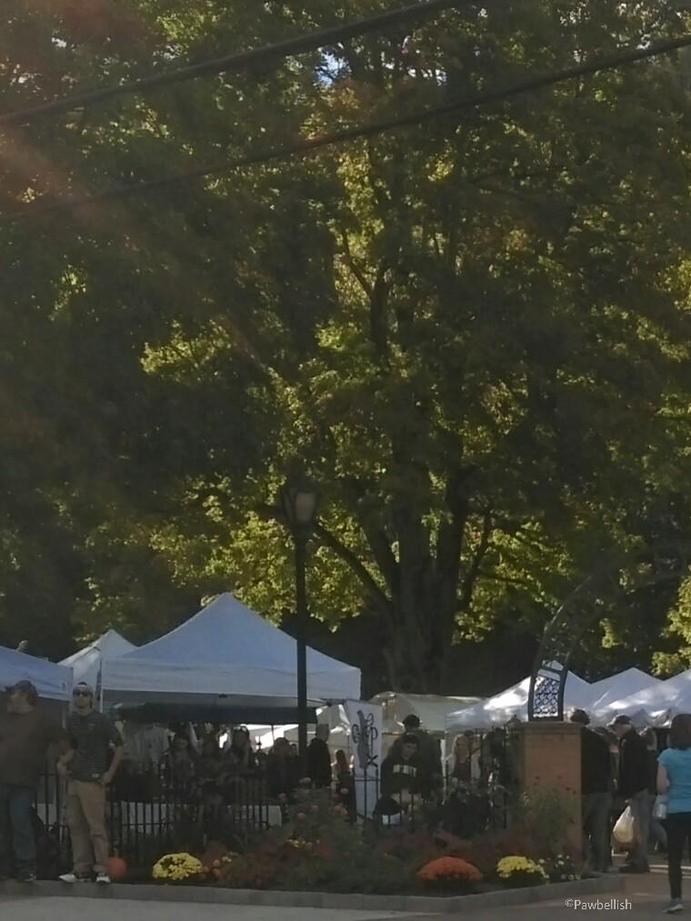 Dog Friendly Apple Butter Festival in Berkeley Springs, WV