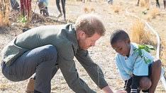Prince Harry planting tress in Botswana