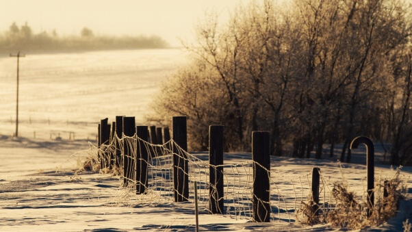 Desktop HD Wallpaper Winter Snow Fence Trees
