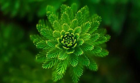 psikologi warna hijau menurut para ahli