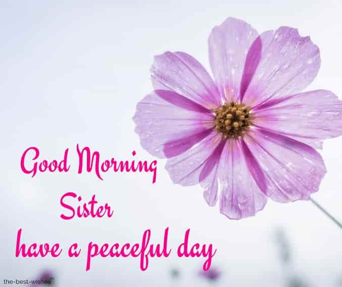 good morning sister have a peaceful day