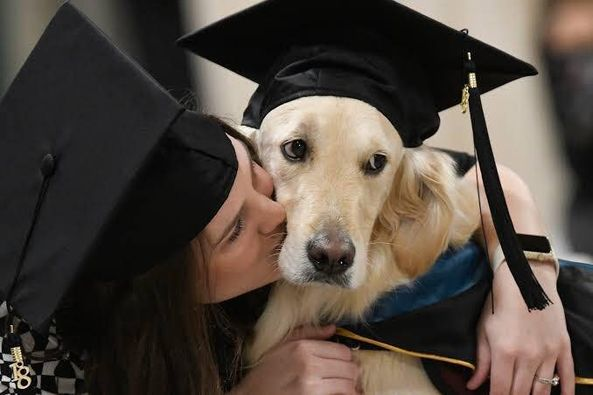 PHOTO NEWS: Service Dog receives master's degree in occupational therapy from Clarkson University (photos)