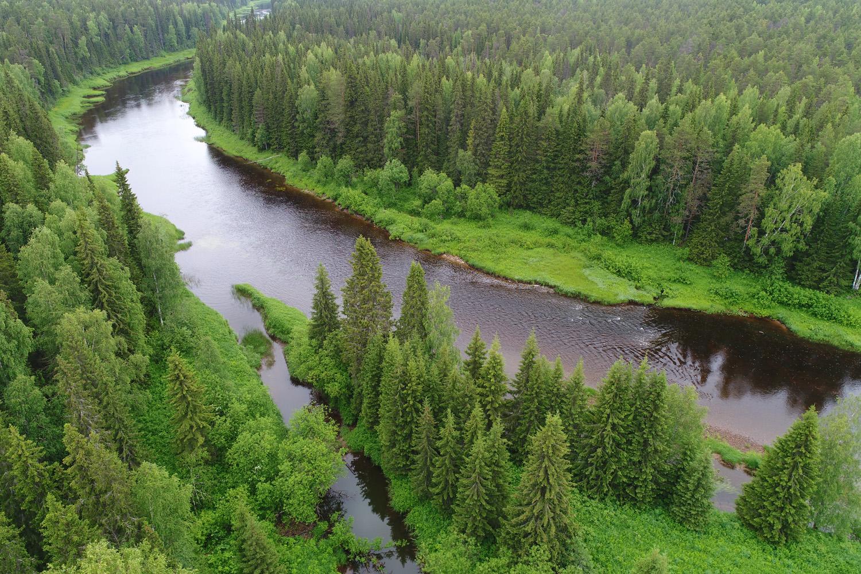 Как исчезают первозданные леса. Архангельская тайга