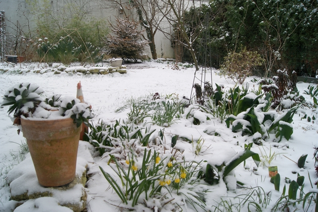 Blick in den verschneiten Garten im März mit Narzissenblüte