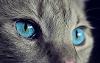 ¿Tu Gato Te Queda Mirando Fijamente? Te Lo Explicamos