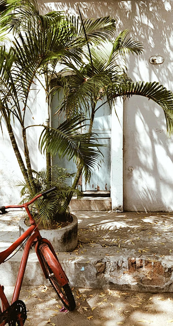 Pondicherry-travel-weekend-getaway-style prism-blog-street photography-palm trees-bicycle-tropical