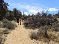Heading south on Panorama Loop Trail, Black Rock Canyon, Joshua Tree National Park