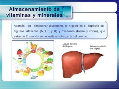 Cuida tu hígado con vitaminas