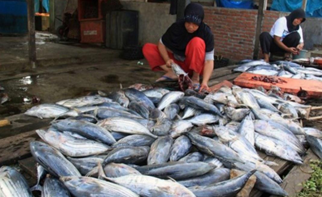 Melihat Peluang Bisnis Ikan Makin Prospektif