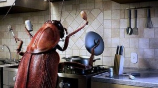 This Is An Effective Way To Destroy All The Cockroaches In Your House!