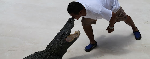 Luchando con caimanes