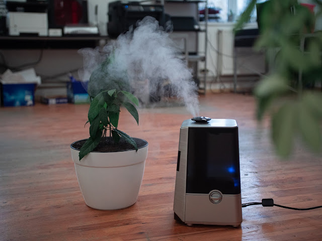 The Best Types of Air Purifiers for Prevention of Allergies