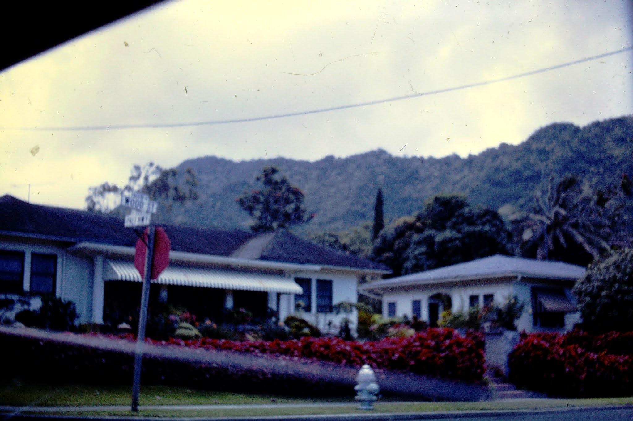 Beautiful Hedge - 1961