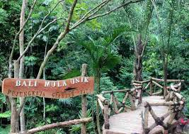 Bali Mula Unik