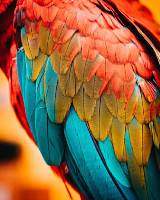In their desperation to spread the myth that dinosaurs evolved into birds, researchers found information  about feathers that refute their beliefs.