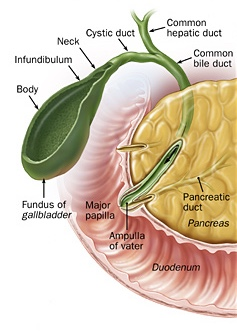 Pancreatic Cancer - Treatment and Surgery
