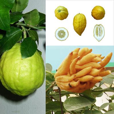 Owocowy kalejdoskop - sprawdź czy znasz te wszystkie egzotyczne owoce!