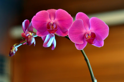 Orchid Centerpiece | Taste As You Go