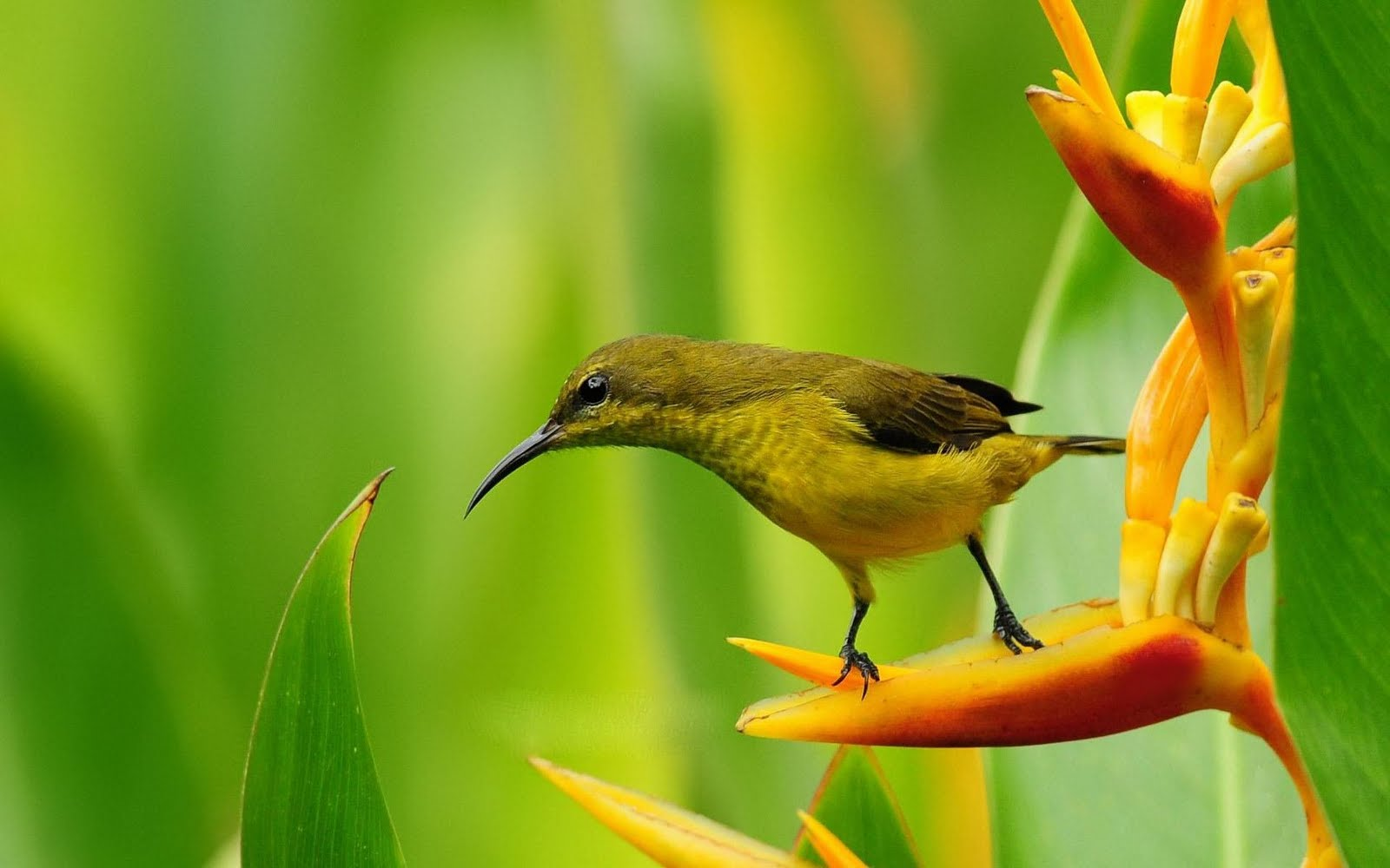 birds nature bird bing background desktop wallpapers flower paradise