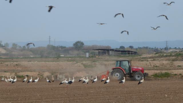 Treballar en bona companyia pels voltants de l'estany d'Ivars i Vila-sana