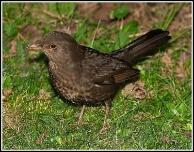 Funny And Weird Animals Common Garden Birds Pictures