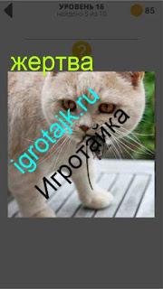 кошка поймала свою жертву мышку и несет в пасти 16 уровень 400 плюс слов 2