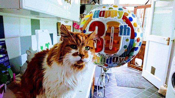 Touching Pictures Of Cat Celebrating His 30th Birthday