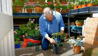 Alan Titchmarsh with Tomato plant