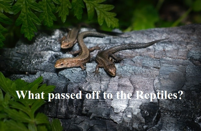 What passed off to the Reptiles? story in English