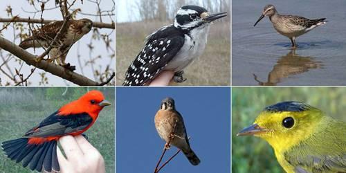 Nama-Nama Burung