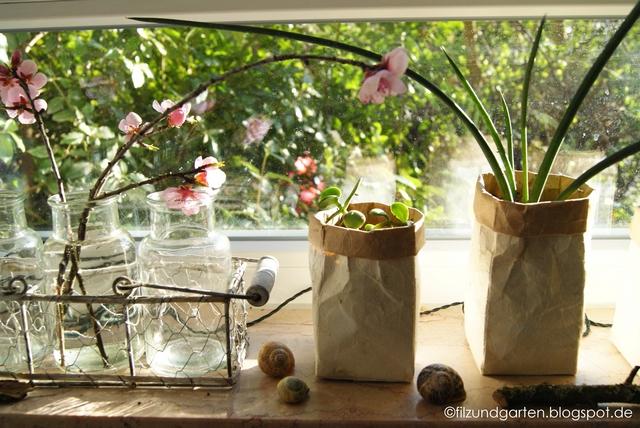 Ableger von Zimmerpflanzen in Pflanzgefäßen aus Milchtüten