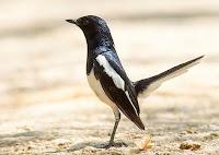 Dengan Memilih Burung Yang Berdiri Tegak