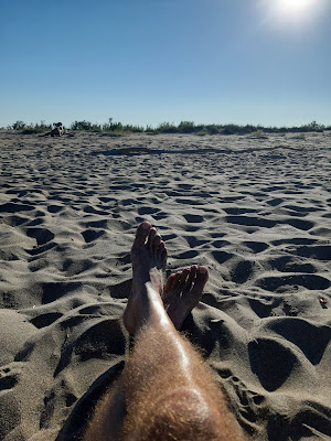 Vista d'uns peus en una platja al capvespre