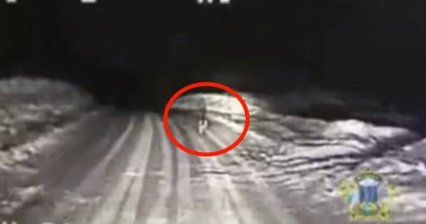 Polícia persigue a perro y no vas a creer a donde lo lleva