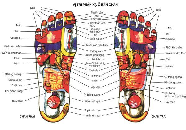 Học spa ở tphcm - tác dụng massage chân trước khi ngủ