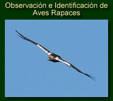 http://iberian-nature.blogspot.com.es/p/ruta-tematica-la-identificacion-de-las.html
