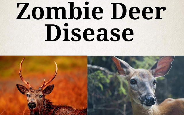 What is zombie's deer diseases