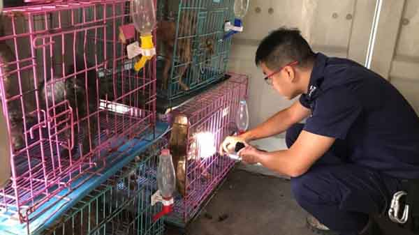Investigador de crueldade animal