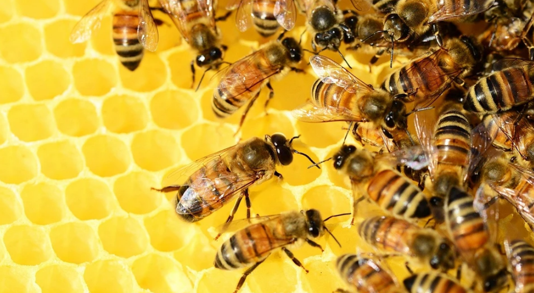 Useful business of bees: medicinal properties and use of propolis