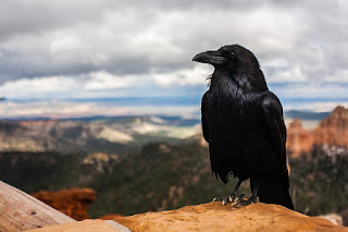 picture of crow in a landscape