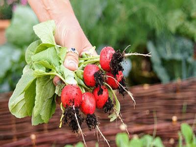 """Что посадить на даче семенами в июне? / Блог """"дача-это просто!"""""""